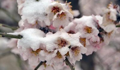 В Україні вдарять сильні заморозки: коли і які регіони накриє холод