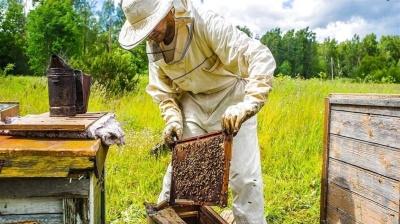 Впав на подвір'ї: чоловік помер через укуси бджіл